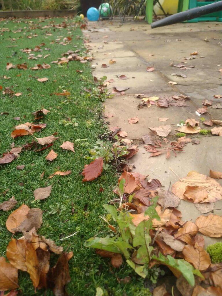 Autumn leaves and moss on garden floor.